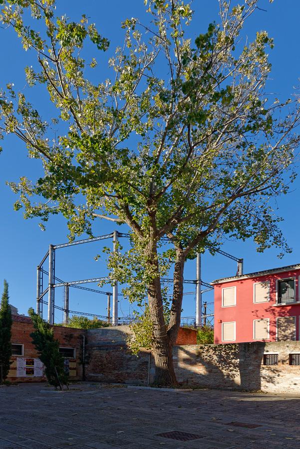 comme un arbre dans la ville... _DSC1400_DxO